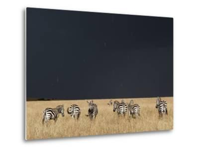 Burchell's Zebras on Savanna Below Stormy Sky