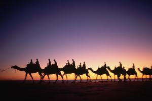 Camels on Beach at Sunset by Paul Souders