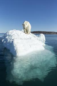Canada, Nunavut Territory, Polar Bear on an Iceberg in Hudson Bay by Paul Souders
