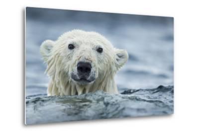 Canada, Nunavut Territory, Repulse Bay, Polar Bear Swimming Near Harbor Islands