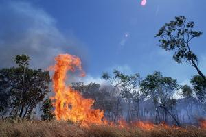 Controlled Forest Fire by Paul Souders