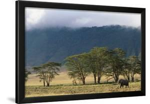 Elephant in Ngorongoro Crater by Paul Souders