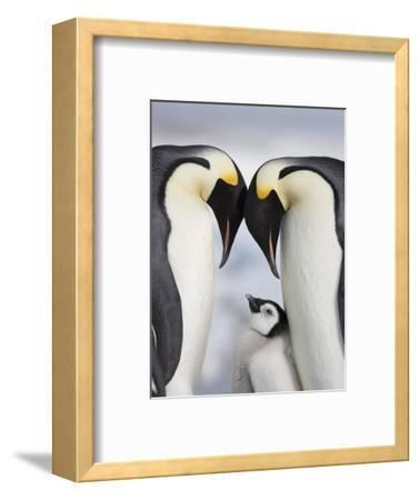 Emperor Penguins and Chick in Antarctica