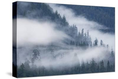 Fog Rolls Through Forest in Misty Fjords National Monument
