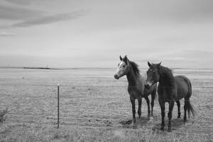 Horse in High Desert, Trujillo, New Mexico by Paul Souders