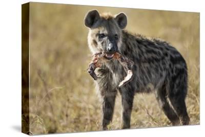 Hyena, Moremi Game Reserve, Botswana