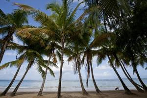 Palm Tree Along Caribbean Beach in Dominican Republic by Paul Souders