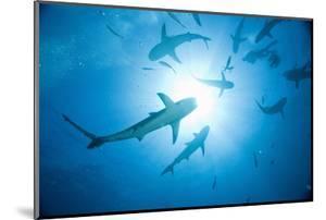 Scuba Diver and Caribbean Reef Sharks at Stuart Cove's Dive Site by Paul Souders