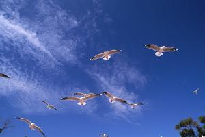 Seagulls Fly above Rockingham by Paul Souders