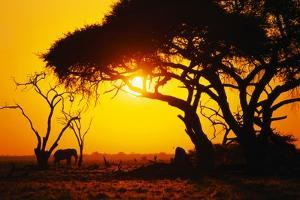 Silhouette of an African Elephant at Sunrise by Paul Souders
