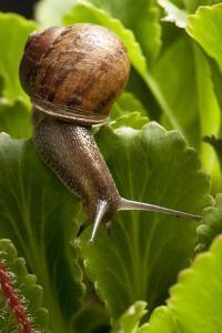 Snail, Seattle, Washington by Paul Souders