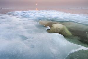 The Ice Bear by Paul Souders