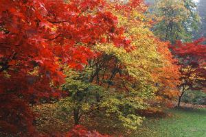 Washington Park Arboretum, Autumn Trees, Seattle, Washington, USA by Paul Souders