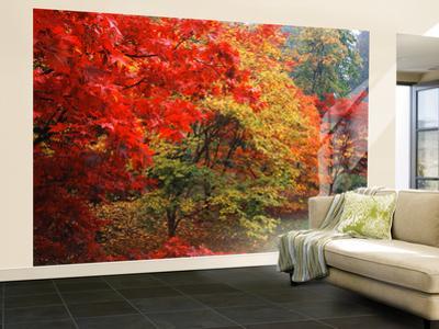 Washington Park Arboretum, Autumn Trees, Seattle, Washington, USA