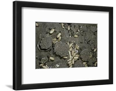 Anthill under a Stone