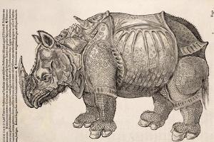 1551 Gesner Armoured Rhino After Durer by Paul Stewart