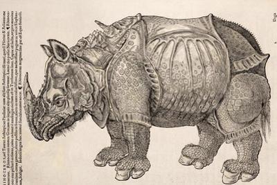 1551 Gesner Armoured Rhino After Durer