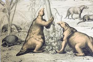 1862 Giant Ground Sloth Megatherium by Paul Stewart