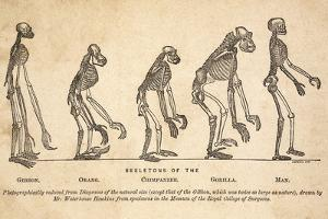 1863 Huxley From Ape To Man, Age-toned by Paul Stewart