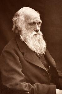 1874 Charles Darwin Picture by Leonard. by Paul Stewart