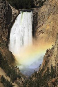 Lower Yellowstone Falls And Spray Rainbow by Paul Stewart
