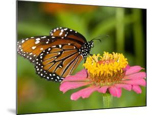A Butterfly Resting on a Flower by Paul Sutherland
