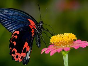 A Butterfly Sipping Nectar from a Flower by Paul Sutherland