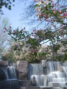 Cherry Trees and Fountain at the Franklin Delano Roosevelt Memorial by Paul Sutherland