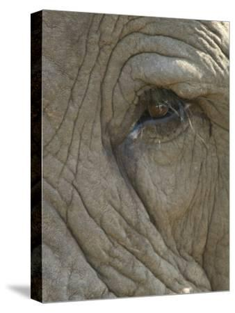 Close Up Detail of the Eye of an African Elephant, Loxodonta Africana