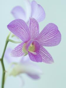 Close Up of a Purple Orchid in a Hotel Lobby by Paul Sutherland