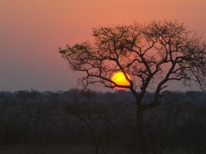 Sunset over a Mopani Forest in Kruger National Park by Paul Sutherland