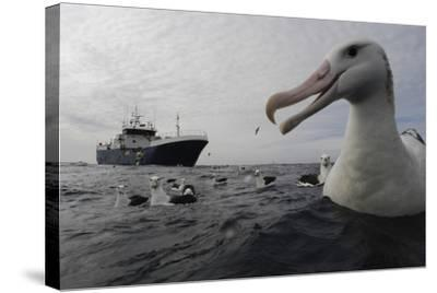 Wandering Albatrosses in the Vicinity of a Toothfish Longliner