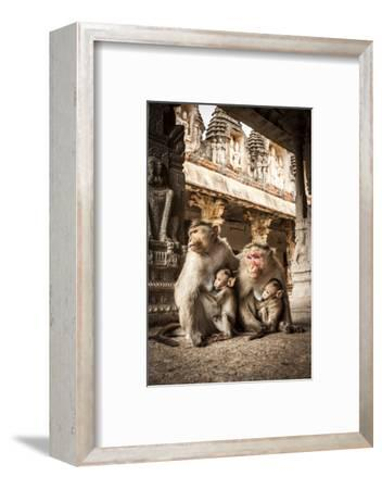 Bonnet Macaque (Macaca Radiata) Females Suckling Babies in Temple, Hampi, Karnataka, India, July