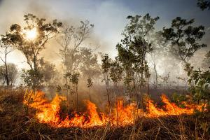 Bush fire triggered by lightning storm, Western Australia by Paul Williams