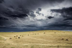 Horses grazing in steppe grassland, Altanbulag, Mongolia by Paul Williams