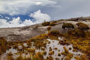Sub-alpine vegetation on the granite rock close to the summit of Mount Kinabalu, Borneo by Paul Williams