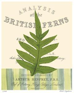 British Fern I by Paula Scaletta