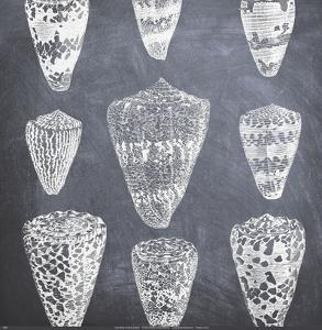 Cone Shells by Paula Scaletta