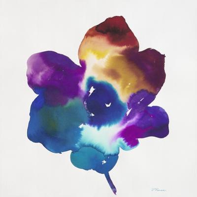 Rainbow Flower by Paulo Romero