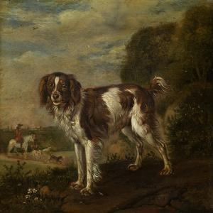A Spaniel by Paulus Potter