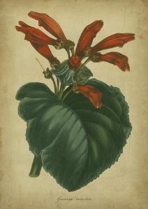 Vermilion Blooms I by Paxton