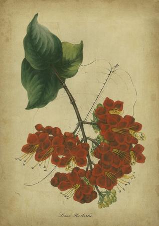 Vermilion Blooms II