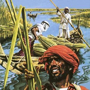 Men of the Marshes of Southern Iraq by Payne
