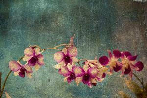 Hawaiian Orchid by pdb1