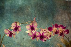 Hawaiian Orchid by pdb1