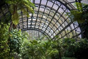 Inside the Botanical Building in Balboa Park in San Diego, California.  inside are over 350 Species by pdb1