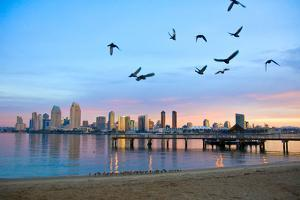 San Diego City Scape at Dawn with Seagulls Flying in the Foreground by pdb1