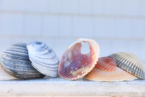 Seashell Background with Space for Text. by pdb1