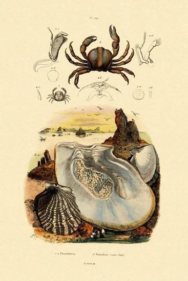 Pea Crab, 1833-39--Giclee Print