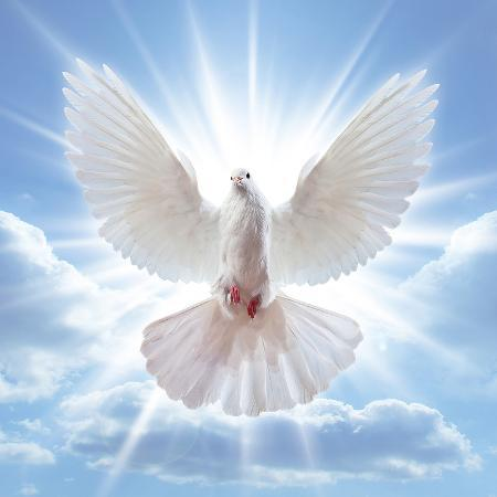 peace-dove-in-front-of-the-sun